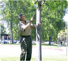 Man inspecting tree